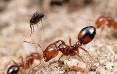 为什么蚂蚁早上醒来会抓痒