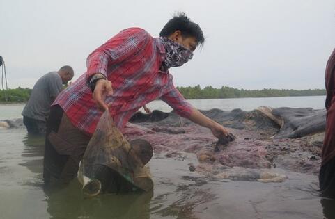 辉南县地图:鲸尸胃塞115个塑料杯 抹香鲸尸身现
