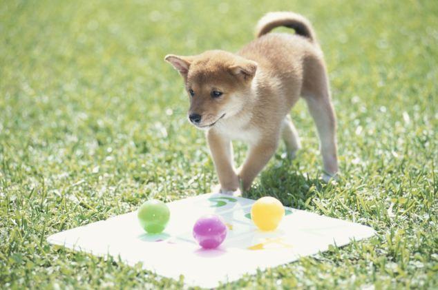 老婆与狗的情色生活_狗狗除了黑白还可以看见黄色和蓝色