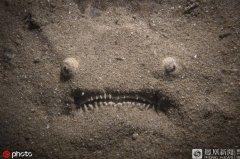 深海中的一幕:瞻星鱼极其凶猛又充满心机的画面