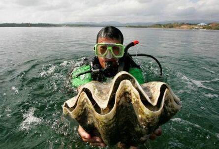女演员下海做这事 在泰国被捕 李妍儿捕捉濒危的巨型蛤蜊