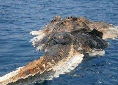 世界十大深海巨怪 传说中的海洋巨怪图片