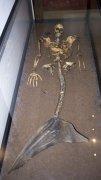 亚特兰蒂斯人鱼之谜:亚特兰蒂斯真的有人鱼真实存在吗(图片)