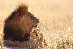 """什么是""""困猎""""?把野生动物放到无法逃脱封闭场所里供人猎杀"""