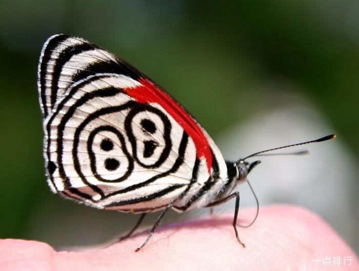 八十八只蝴蝶