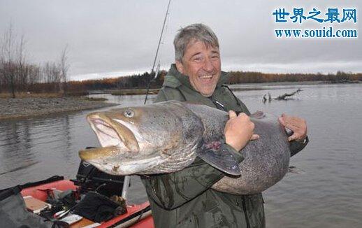 世界上最大的巨型哲罗鲑,长15米的湖怪(图片)(www.qihuanshijie.com)