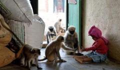 """印度5岁男童与猴子沟通无碍 村民视其为""""神""""!"""