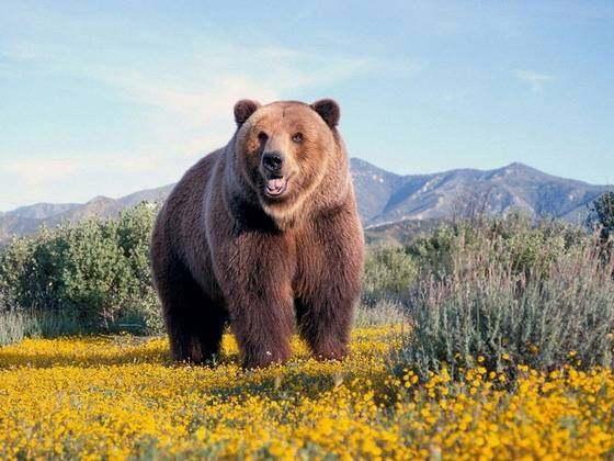 陆地现存体型前十的物种排名,大多数为食草动物