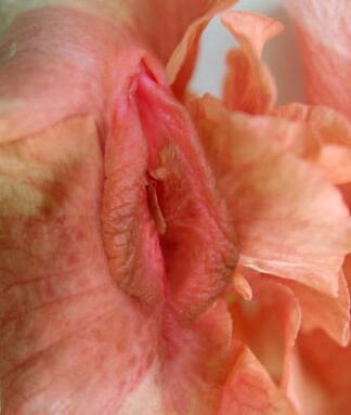 女性阴部真实照片