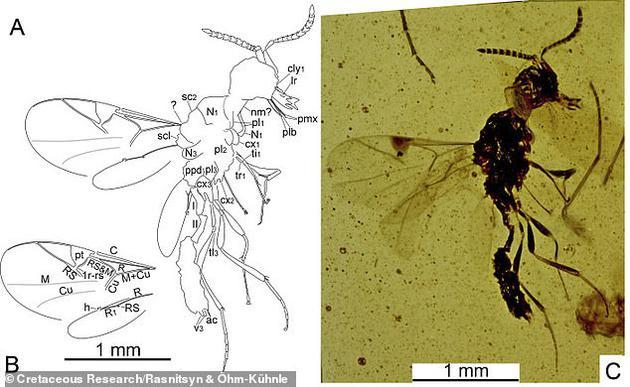 """研究人员发现这种昆虫(右图)嘴部附近有两个特征,分别是""""上颚触须""""(左图标识为pmx),""""唇触须""""(左图标识为plb)。"""