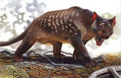 灭绝动物的图片和名字:已灭绝的动物名单图片大全