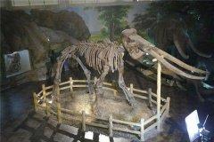 古菱齿象可谓是迄今为止最大的大象 古菱齿象化石惊现北京