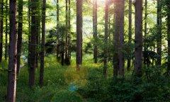 中国最早远古森林:这片远古森林距今约3.71亿年