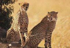 陆地食肉动物排名20强 十大攻击力最强动物有哪些