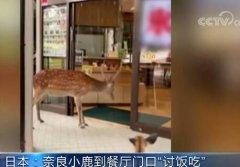 日本奈良小鹿讨食被婉拒 鞠躬讨食网友狂赞礼貌