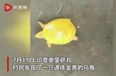 印度渔民发现金色乌龟 金光闪闪实属罕见