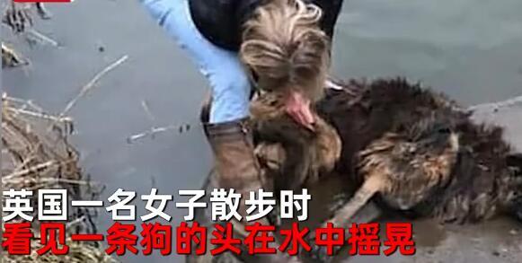 英国一女子看见狗狗在水中挣扎 拉出来一看当场怒了